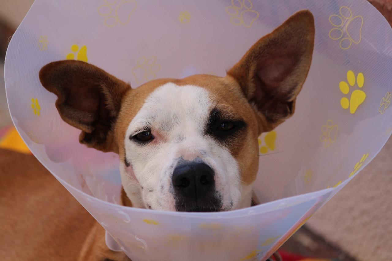 Pet economy: aumenta la propensione a spendere per le cure veterinarie verso i nostri animali da compagnia
